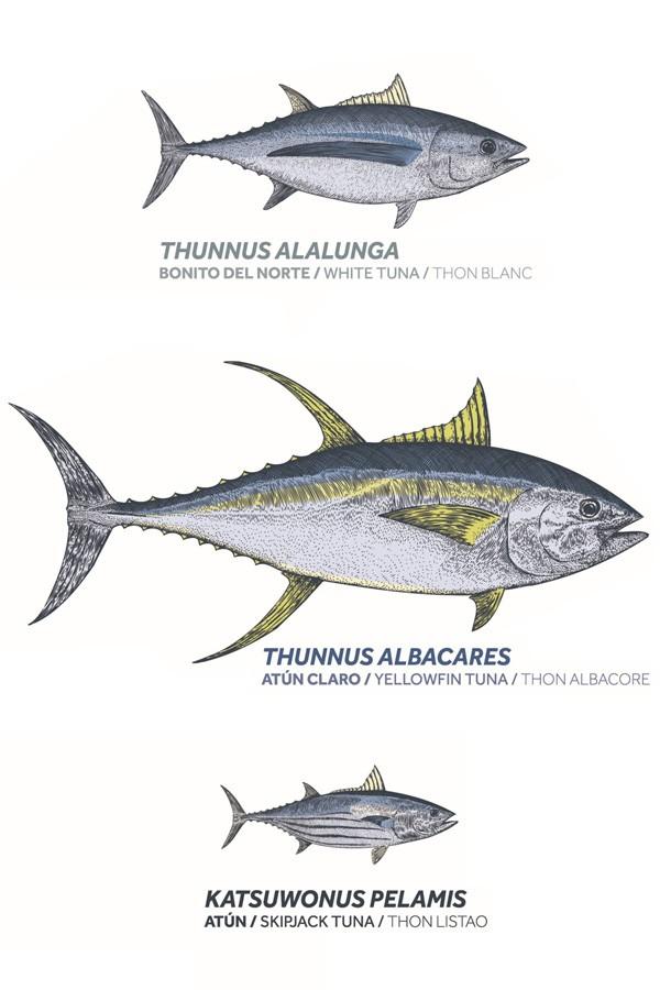 Clases de atún y túnidos Frinsa
