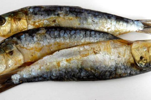 propiedades-sardinas